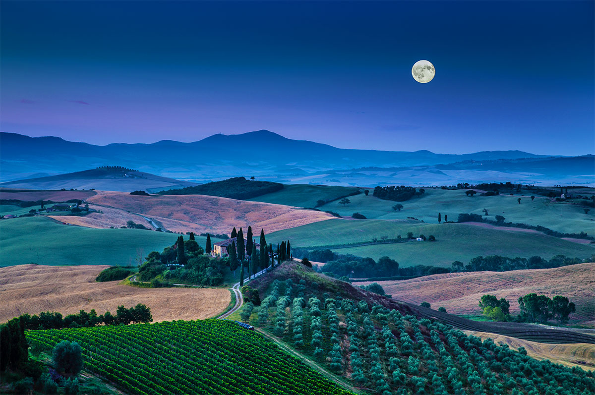 Moonlit Vineyard