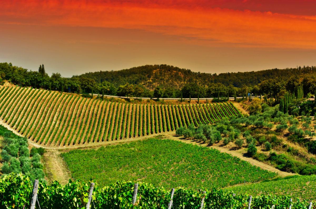 Italian Vineyard, Red Sunset